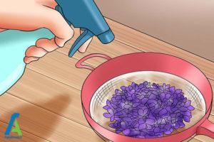 1 گل بنفشه آبنباتی
