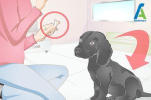 1 آموزش سگ برای نگهداشتن استخوان
