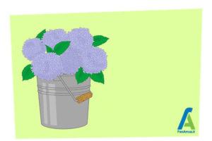 1 خشک کردن گل ادریسی
