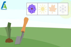 1 پرورش گل زنبق رشتی
