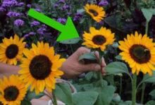 Photo of چگونه گل های طبیعی را در هوای آزاد خشک کنیم؟