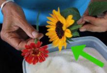 Photo of چگونه گل های طبیعی را در مایکروویو خشک کنیم؟