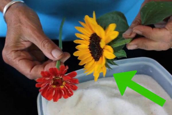 1 روش دیگر خشک کردن گل