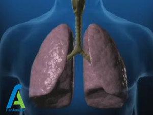 1 عملکرد دفاعی دستگاه تنفسی در مقابل ذرات