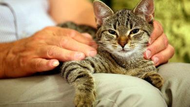 Photo of 6 دلیل برای انتخاب گربه بزرگسال به جای بچه گربه به عنوان حیوان خانگی