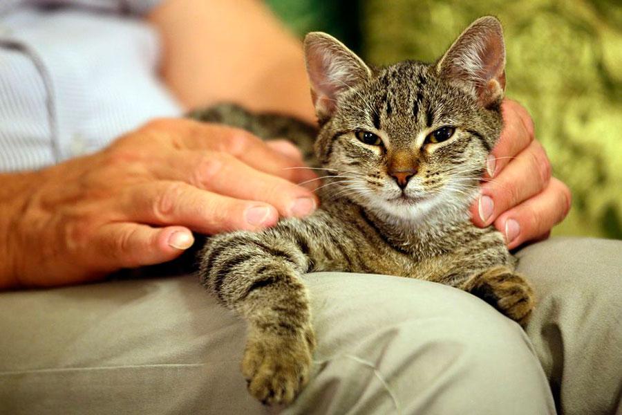 1 انتخاب گربه بزرگسال به عنوان حیوان خانگی
