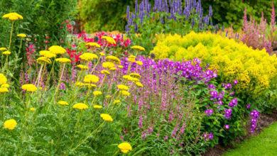 Photo of معرفی 16 گل زیبای تابستانی مناسب برای کاشت در باغچه
