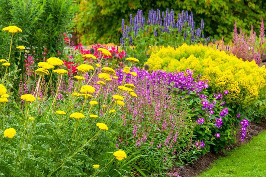 1 معرفی گل های تابستانی