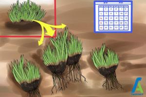 1 تکثیر گل فلوکس