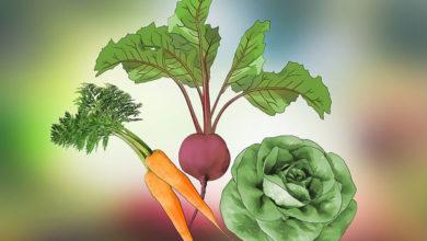 Photo of چگونه در خانه یک باغچه سبزیجات بسازیم؟