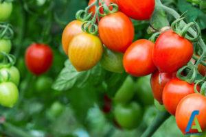 1 افزایش باردهی سبزیجات
