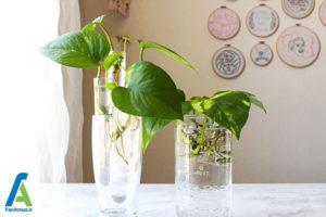 1 نحوه پرورش گل پتوس در آب
