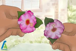 1 شینیون مو با گل طبیعی