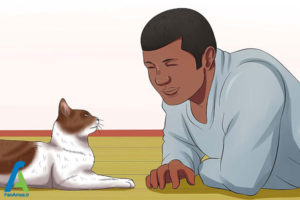 1 اصول صحیح بغل کردن و حمل گربه