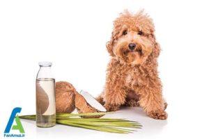 1 فواید روغن نارگیل برای حیوانات خانگی