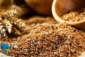 1 آنتی نوترینت Anti Nutrients موجود در غلات