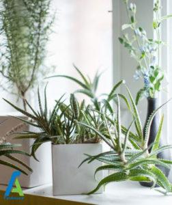 10 گل و گیاه آپارتمانی