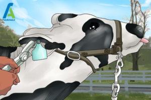 4 احداث مزرعه پرورش گاو