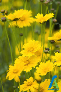 10 معرفی گل های تابستانی