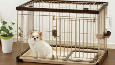 Photo of چگونه بوی حیوانات خانگی را از منزل دور کنیم؟