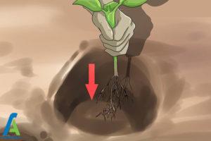 9 تکثیر گل فلوکس