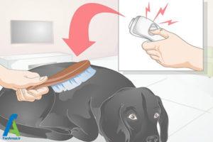 9 نحوه تیمار کردن سگ خانگی