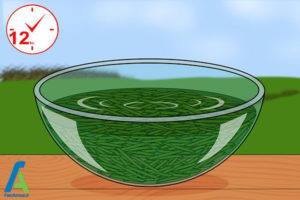 5 روشهای تسریع در رشد گیاهان