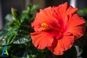 10 گل های ایمن برای افراد آلرژیک