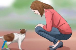 10 اصول صحیح بغل کردن و حمل گربه