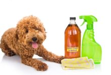 Photo of چگونه از سرکه سیب برای شستشو و سلامت سگ استفاده کنیم؟