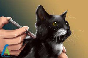 10 تزریق انسولین به گربه خانگی