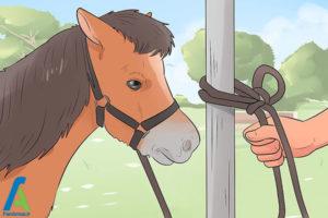 7 نحوه نگهداری از اسب مینیاتوری