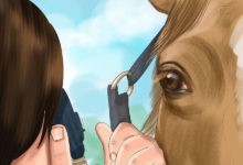 Photo of چگونه بیماری و مشکلات چشمی اسب را درمان کنیم؟