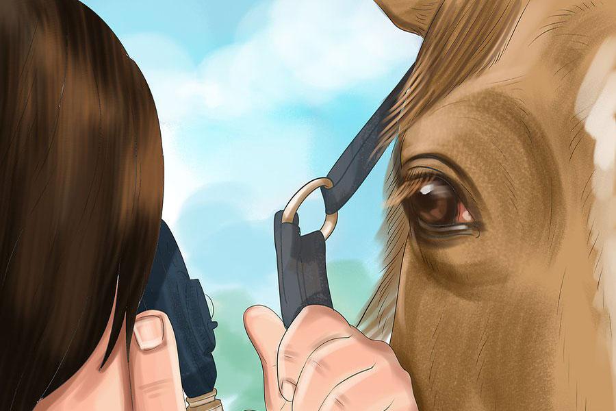 8 درمان بیماری چشمی اسب