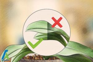 5 اصول نگهداری و پرورش گل ارکیده