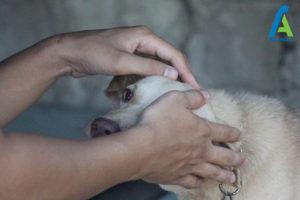 5 رام کردن سگ