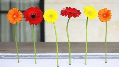 Photo of چگونه با گل های طبیعی مگنت های تزئینی بسازیم؟