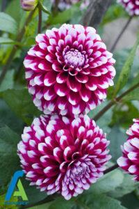 11 معرفی گل های تابستانی