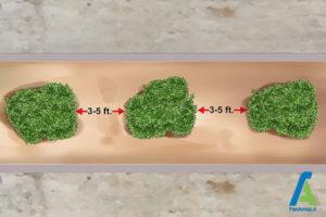 10 تکثیر گل فلوکس