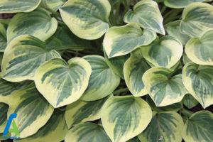 11 گل های ایمن برای افراد آلرژیک