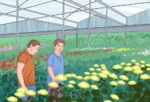 Photo of چگونه یک فروشگاه گل و گیاه راه اندازی کنیم؟