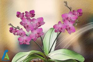 6 اصول نگهداری و پرورش گل ارکیده