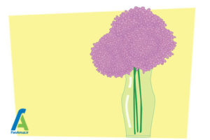 9 خشک کردن گل ادریسی