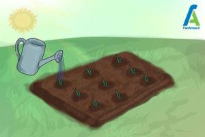 12 پرورش گل گلایول