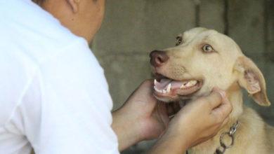 Photo of چگونه حیواناتی مثل سگ را آرام کرده تا رام شوند؟