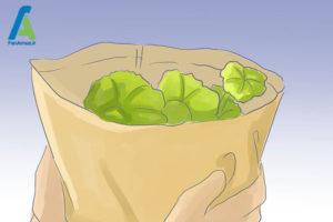 9 مراقبت از گل شمعدانی