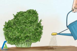 11 تکثیر گل فلوکس