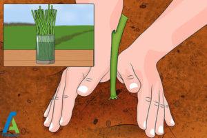 7 روشهای تسریع در رشد گیاهان