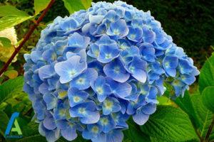 12 گل های ایمن برای افراد آلرژیک