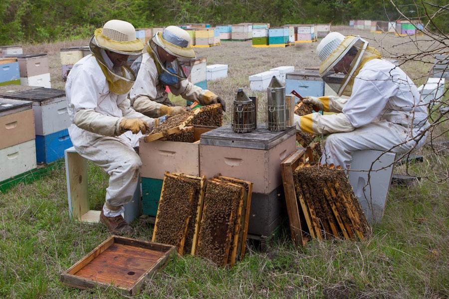 12 نحوه برداشت عسل